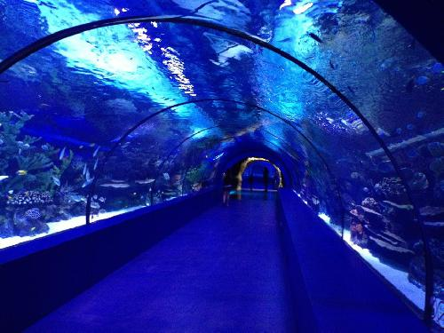 Antalya Aquarium touren